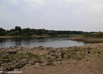 Reste der Burg Quina und Hungersteine (u.a. von 1934) nur bei Elbe-Niedrigwasser sichtbar, August 2015